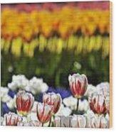 Spring Flowers 11 Wood Print