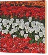 Spring Flowers 16 Wood Print