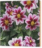 Spring Flowers 4 Wood Print