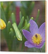 Spring Flowers. Flowers Of Holland Wood Print