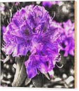 Spring Flowers Wood Print by Mark Alexander