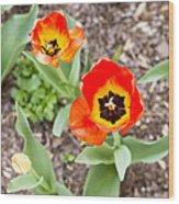 Spring Flowers No. 7 Wood Print