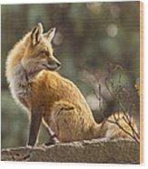 Spring Fox Wood Print