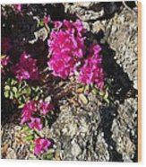 Spring From Rocks Wood Print