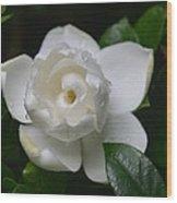 Spring Gardenia 2013 Wood Print