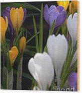 Spring Glow Wood Print