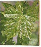 Spring Grape Leaf Wood Print