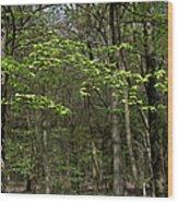 Spring Greenery Wood Print