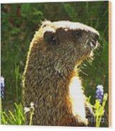 Spring groundhog  Wood Print