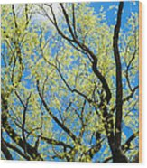 Spring Has Come - Featured 3 Wood Print