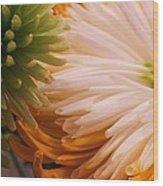 Spring Has Sprung II Wood Print