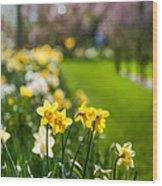 Spring In Holland. Garden Keukenhof Wood Print