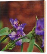 Spring In Medicine Park Wood Print