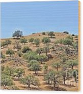 Spring In The California Hills  6950 Wood Print