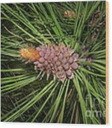 Spring In The Pines Wood Print by The Stone Age