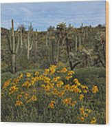 Spring In The Superstition Wilderness Wood Print