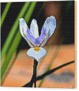 Spring Iris Wood Print