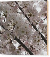 Spring Is Beautiful - A Cloud Of Pastel Pink Blossoms Wood Print