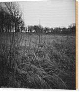 Spring Is Near Holga Photography Wood Print