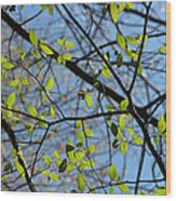 Spring Leaves 2 Wood Print