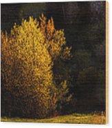 Spring Light Wood Print