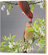 Cardinal Spring Love Wood Print