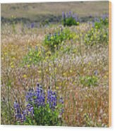 Spring Lupines And Cheatgrass Wood Print