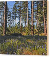 Spring Lupines In The Forest Wood Print