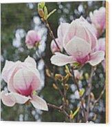 Spring Magnolia Tree Flowers Pink White Wood Print