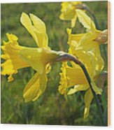 Spring Meadow Field Daffodil Flowers Wood Print