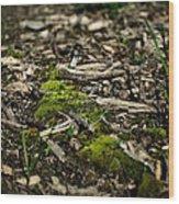Spring Moss Wood Print