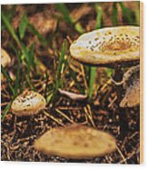 Spring Mushrooms Wood Print
