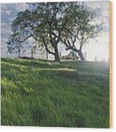 Spring Oaks Wood Print