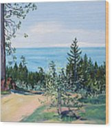 Spring Olive Grove And Pathway To The Sea Wood Print