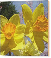 Spring Orange Yellow Daffodil Flowers Art Prints Wood Print