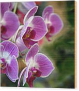 Spring Orchids I Wood Print