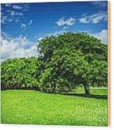 Spring Park Wood Print