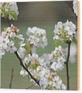 Spring Pear Blooms Wood Print