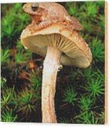 Spring Peeper On Mushroom Wood Print