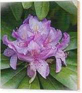 Spring Perfect Rhodie Wood Print