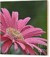Spring Pink 2014 Wood Print