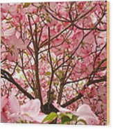Spring Pink Dogwood Tree Blososms Art Prints Wood Print by Baslee Troutman
