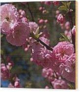 Spring Pink Flowering Wood Print