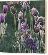 Spring Remembered Wood Print