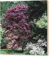Spring Retreat Wood Print