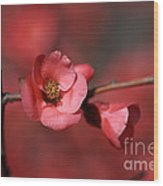 Spring Richness - Flowering Quince Wood Print