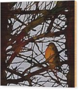 Spring Robins Gather Wood Print