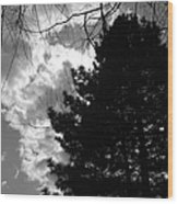 Spring Sky And Pine 1 Bw Wood Print