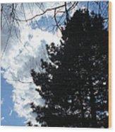 Spring Sky And Pine 1 Wood Print