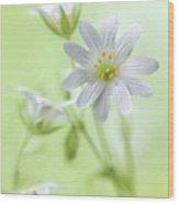 Spring Sparkle Wood Print